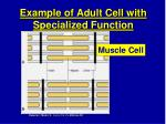 example of adult cell with specialized function20