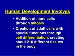 human development involves