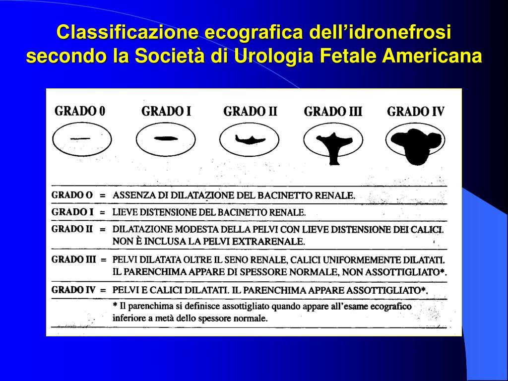 Classificazione ecografica dellidronefrosi