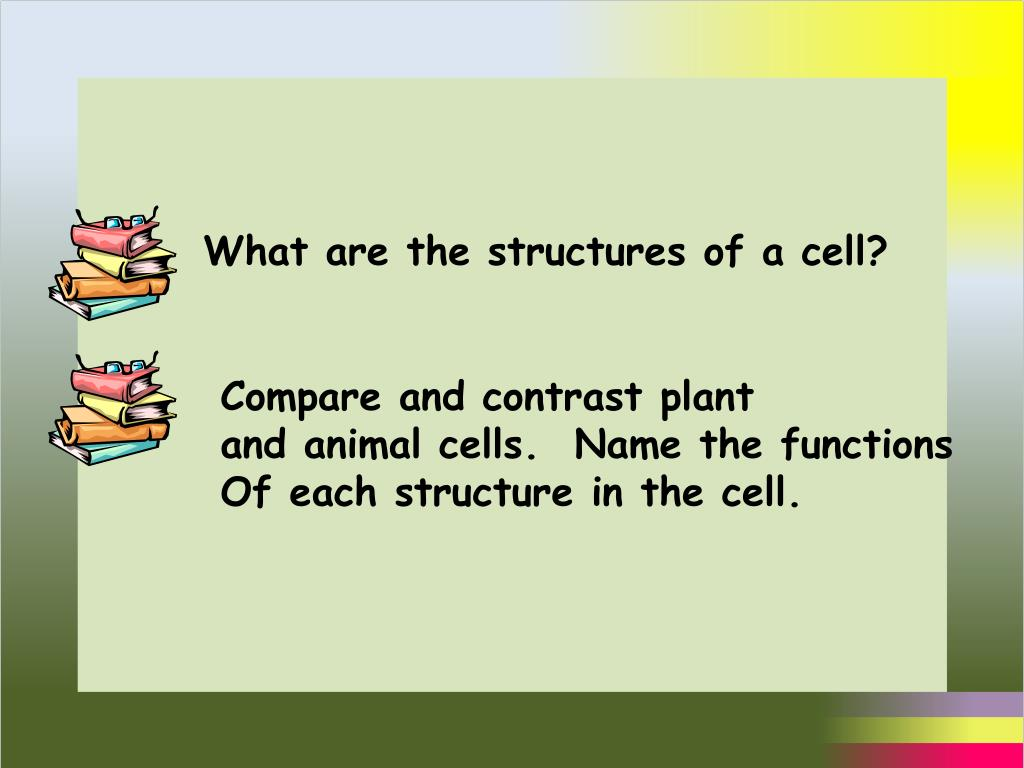 What are the structures of a cell?