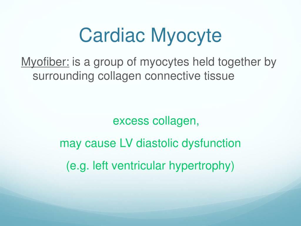 Cardiac Myocyte