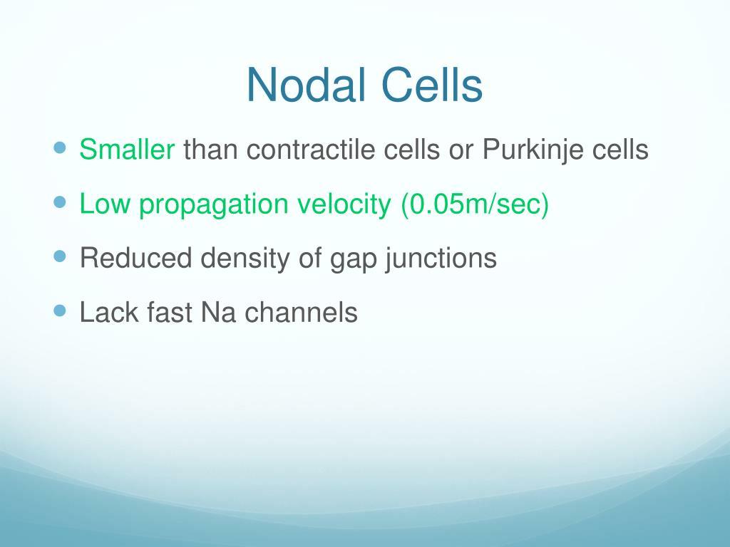 Nodal Cells