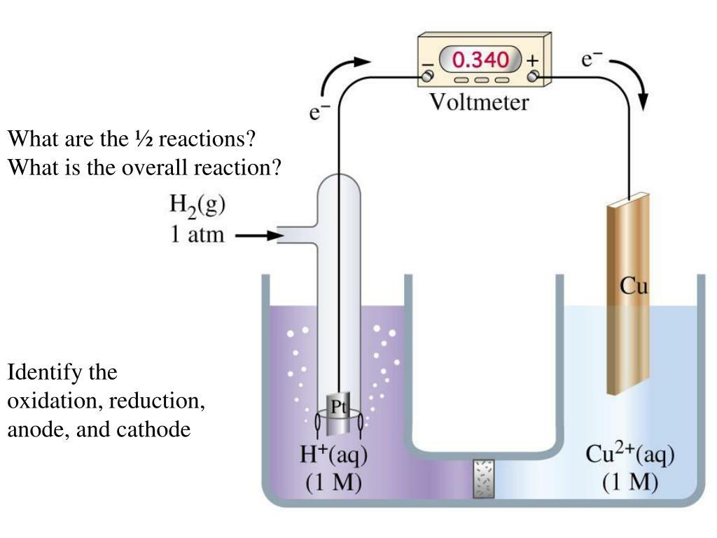 What are the ½ reactions?