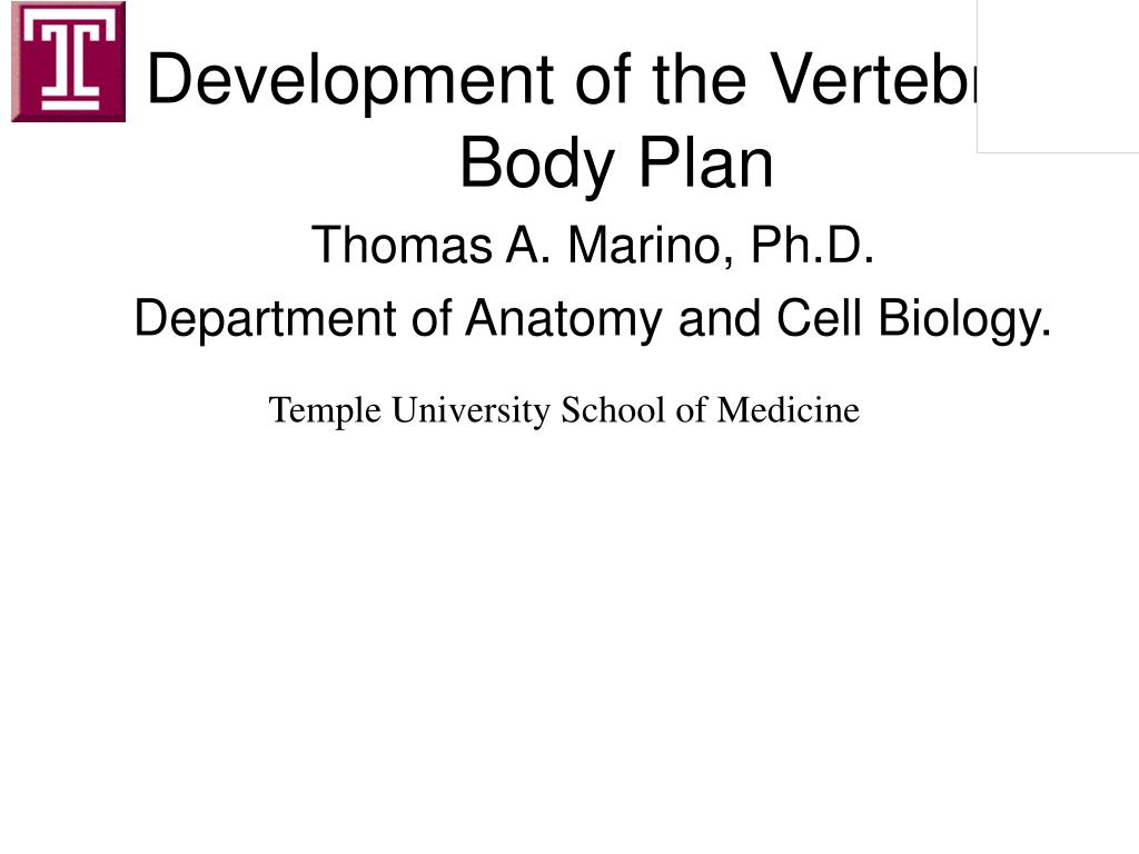 Development of the Vertebrate Body Plan