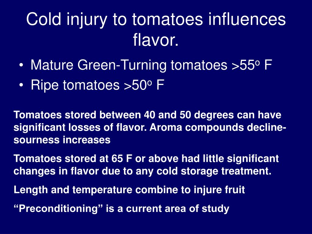Cold injury to tomatoes influences flavor.