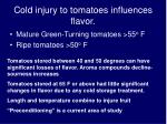 cold injury to tomatoes influences flavor