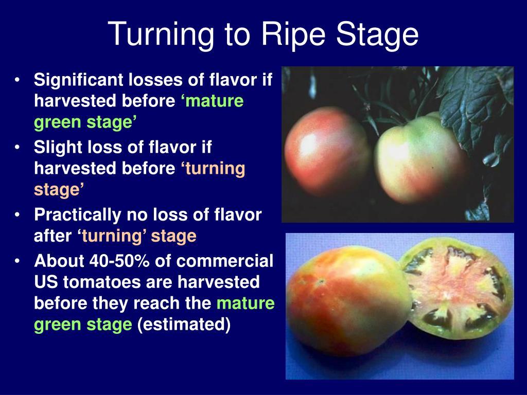 Turning to Ripe Stage