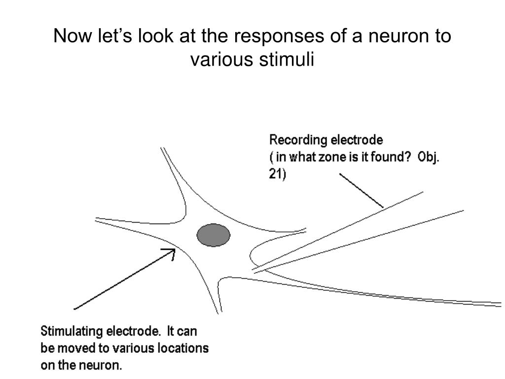 Now let's look at the responses of a neuron to various stimuli