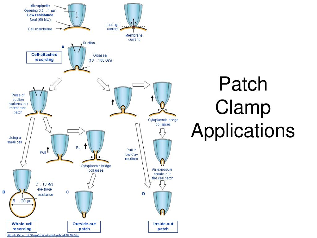 Patch Clamp Applications