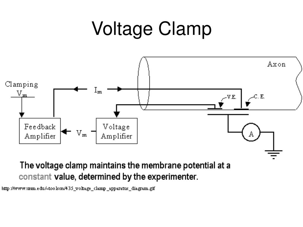 Voltage Clamp