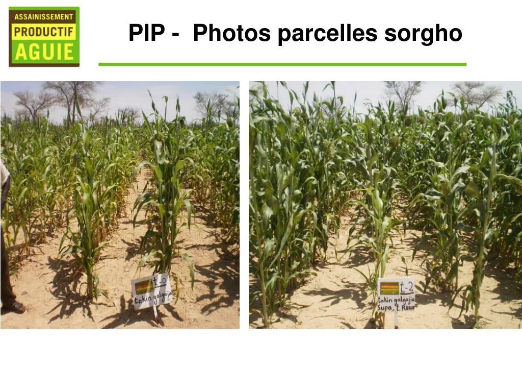 PIP -  Photos parcelles sorgho
