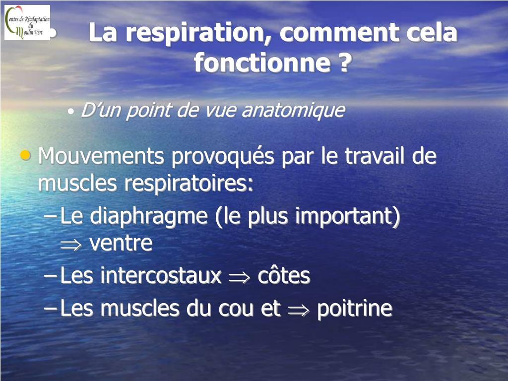 La respiration, comment cela fonctionne ?