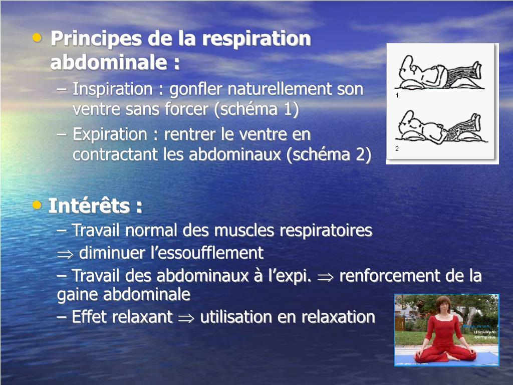 Principes de la respiration abdominale :