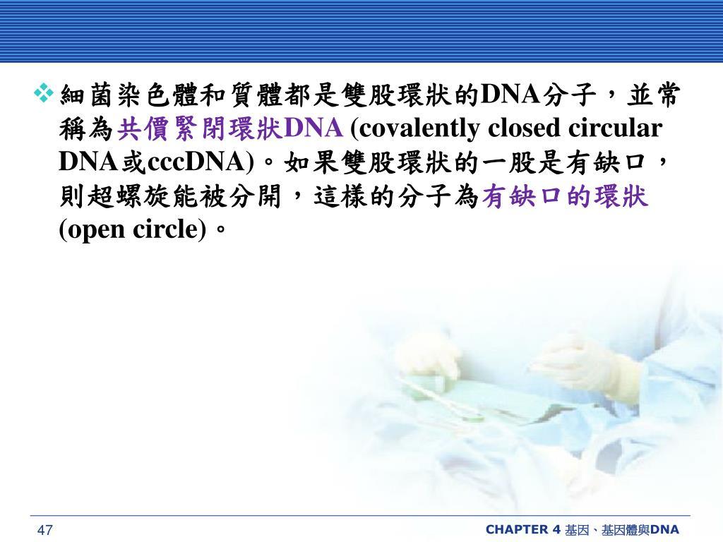 細菌染色體和質體都是雙股環狀的
