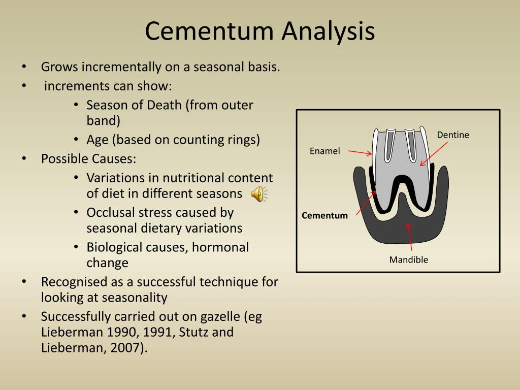 Cementum Analysis