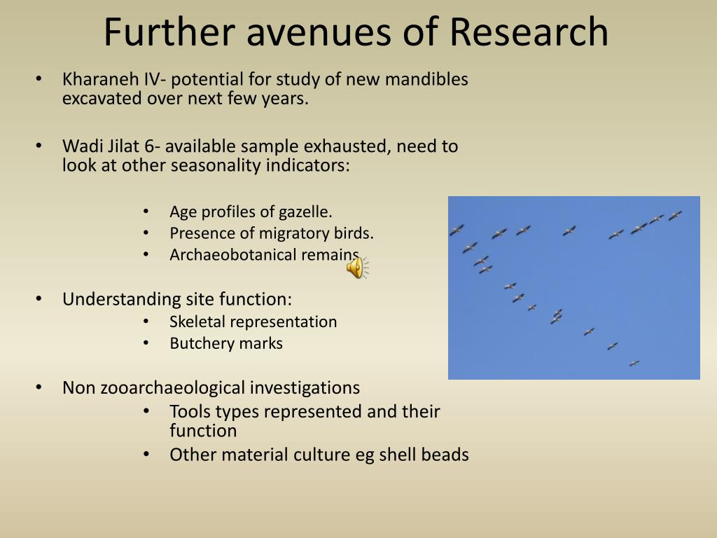 Further avenues of Research