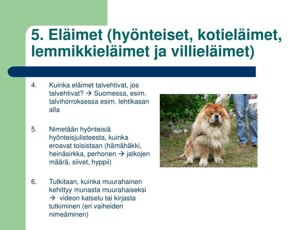 5. Eläimet (hyönteiset, kotieläimet, lemmikkieläimet ja villieläimet)