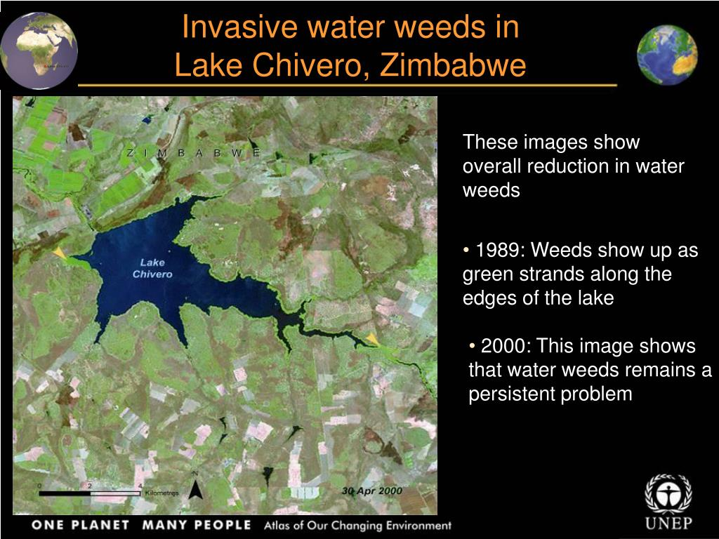 Invasive water weeds in
