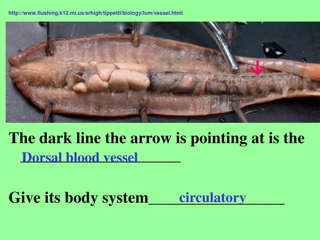 http://www.flushing.k12.mi.us/srhigh/tippettl/biology/lum/vessel.html