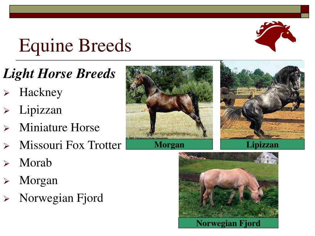 Equine Breeds