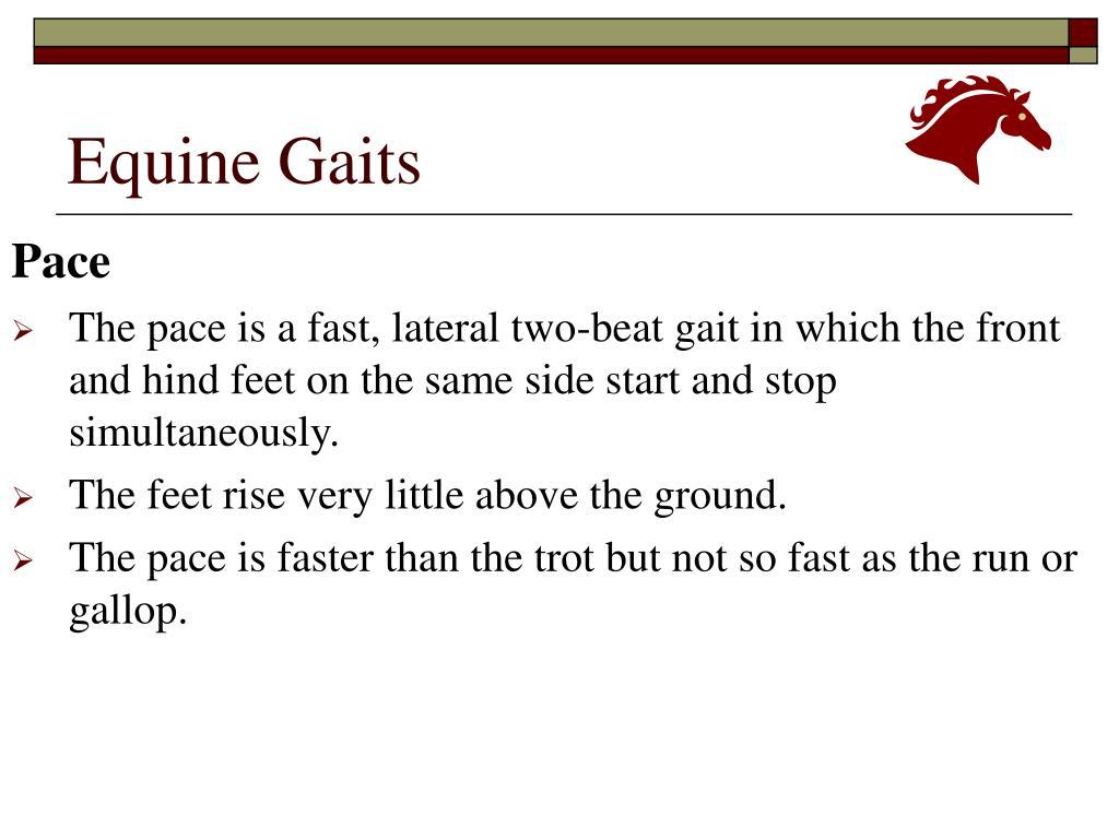 Equine Gaits