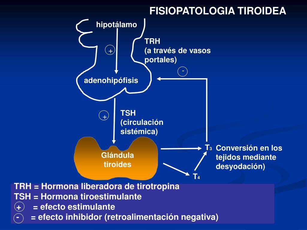FISIOPATOLOGIA TIROIDEA