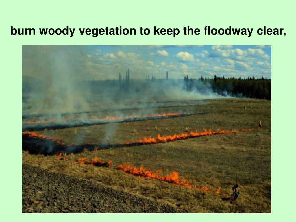 burn woody vegetation to keep the floodway clear,