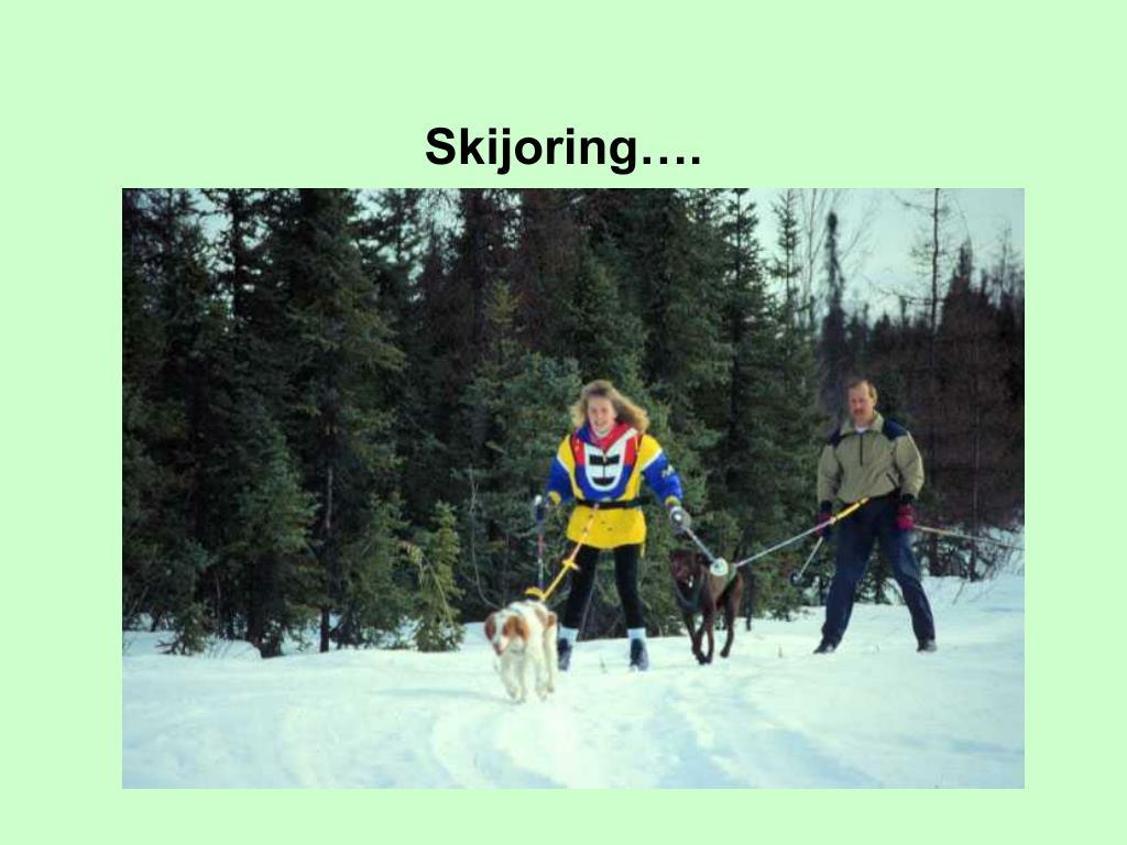 Skijoring….