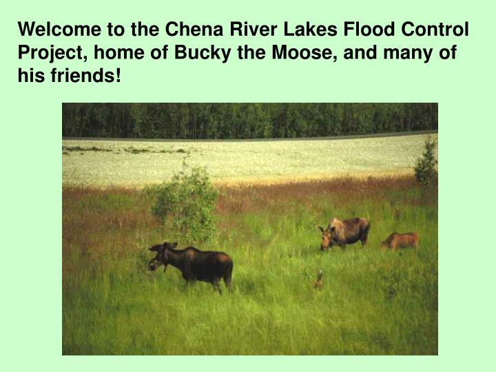 Welcome to the Chena River Lakes Flood Control Project, home of Bucky the Moose, and many of his fri...