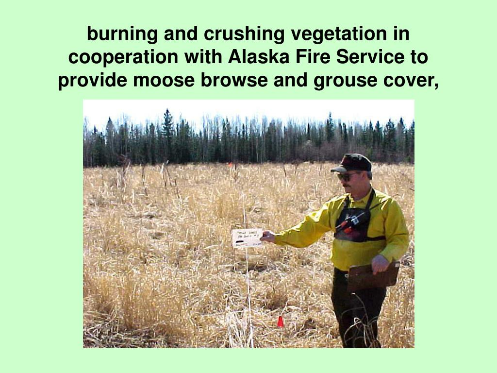 burning and crushing vegetation in cooperation with Alaska Fire Service to provide moose browse and grouse cover,
