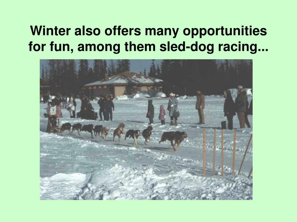 Winter also offers many opportunities for fun, among them sled-dog racing...