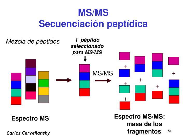 1  péptido