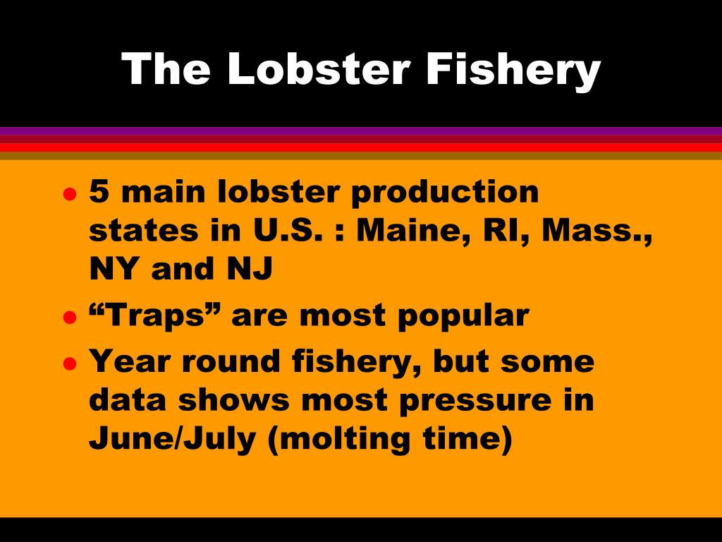 The Lobster Fishery
