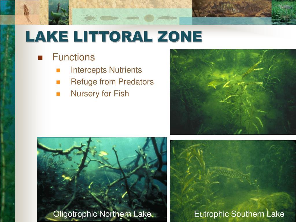 LAKE LITTORAL ZONE