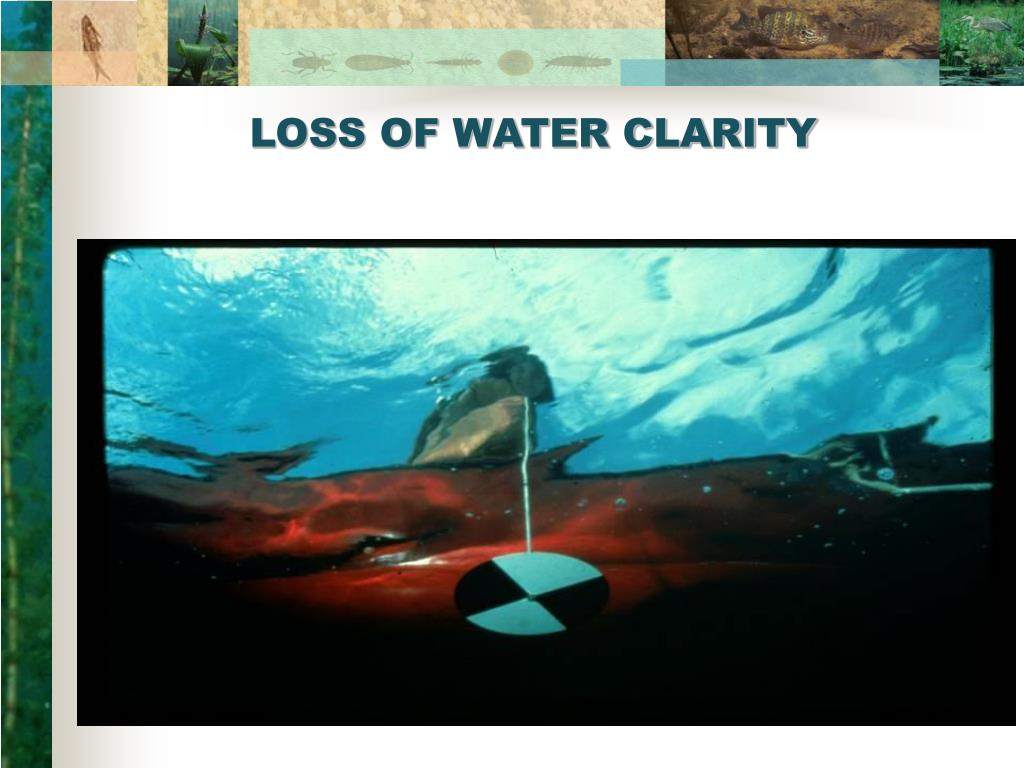 LOSS OF WATER CLARITY