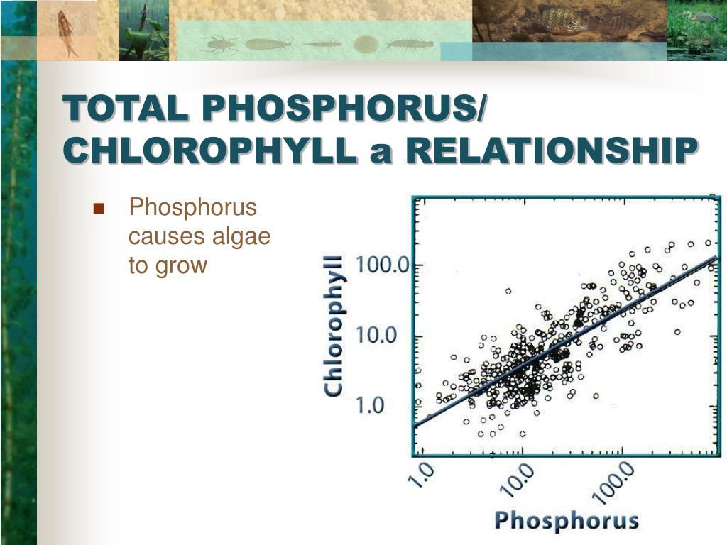 TOTAL PHOSPHORUS/ CHLOROPHYLL a RELATIONSHIP