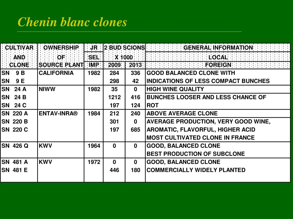 Chenin blanc clones