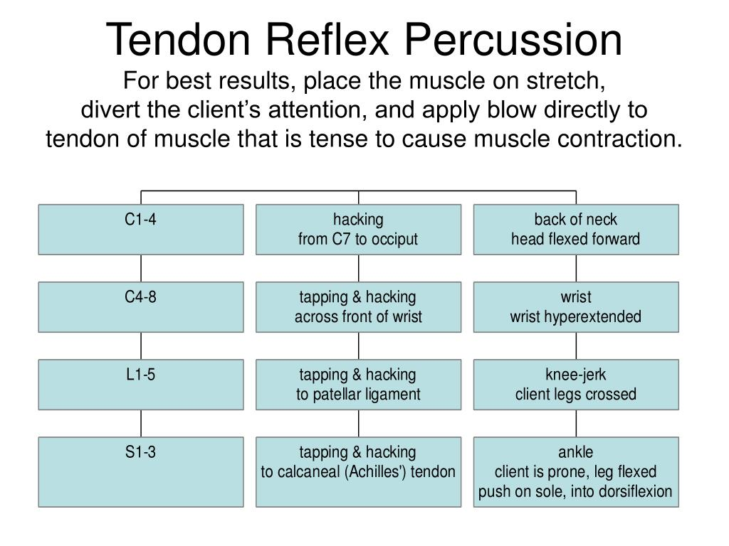Tendon Reflex Percussion