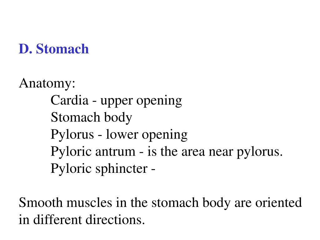 D. Stomach