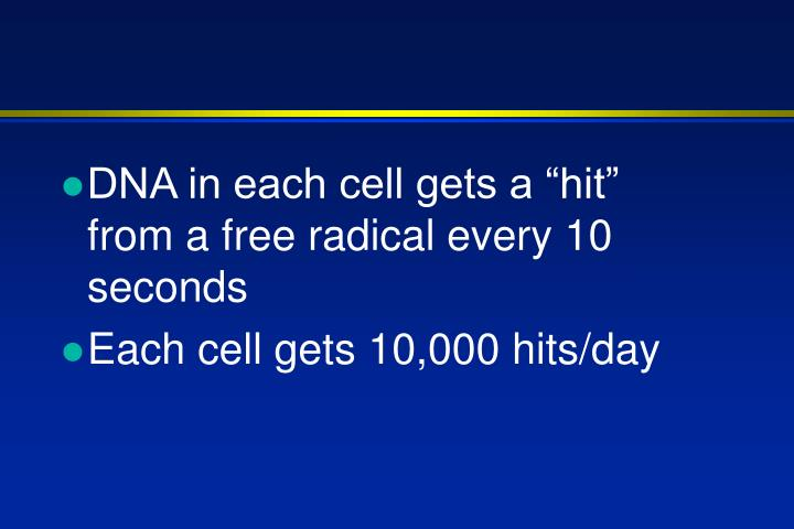 "DNA in each cell gets a ""hit"" from a free radical every 10 seconds"