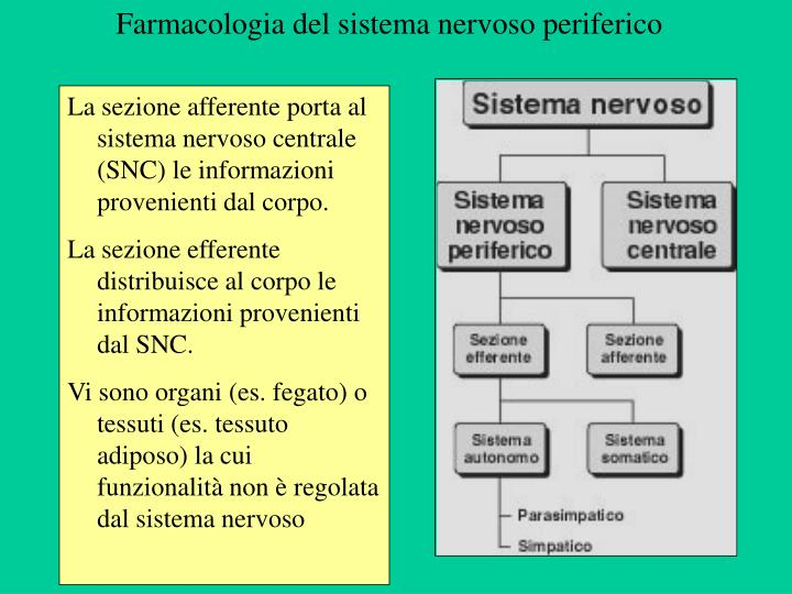 Farmacologia del sistema nervoso periferico