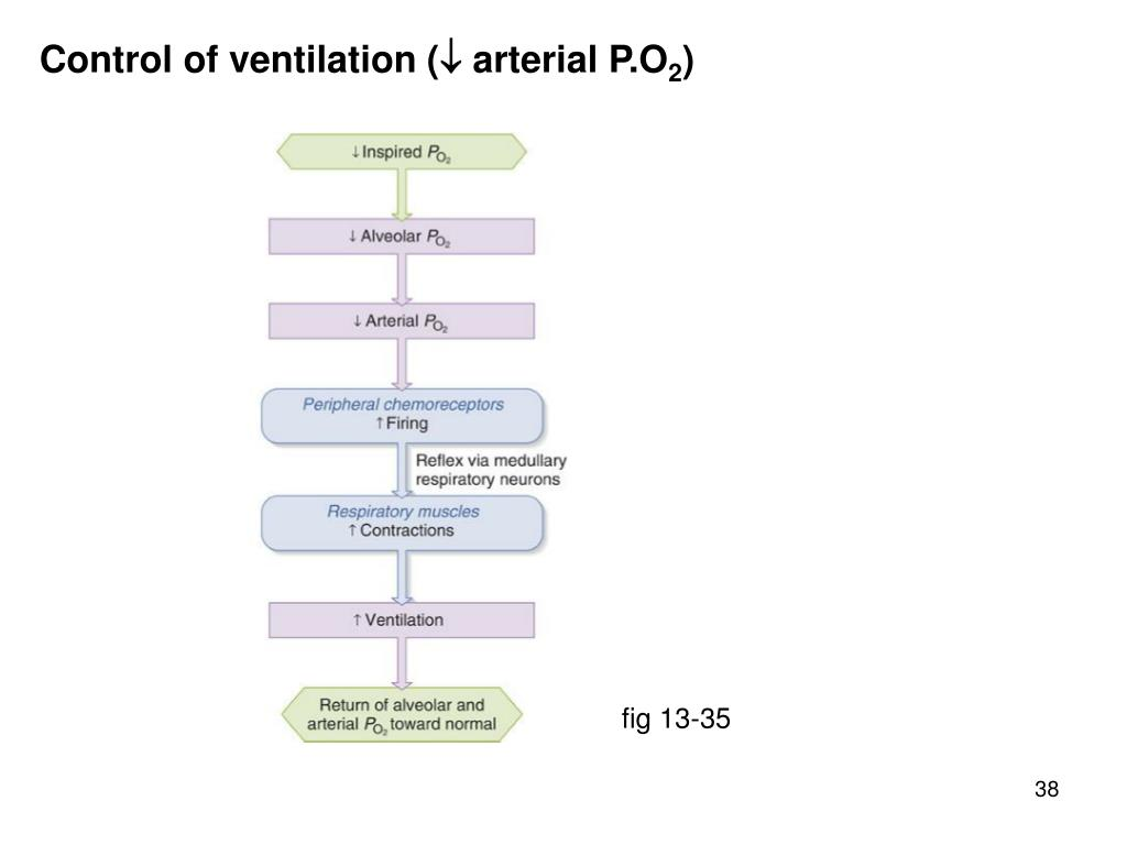 Control of ventilation (