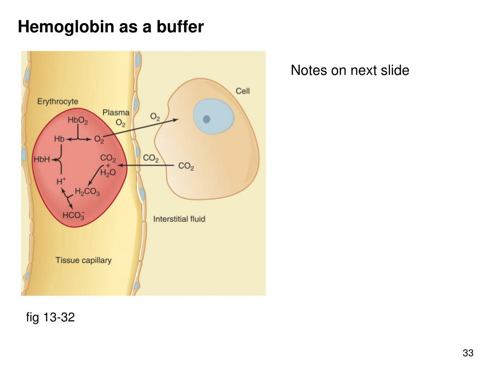 Hemoglobin as a buffer