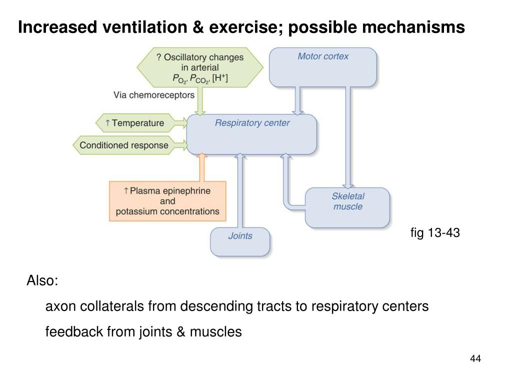 Increased ventilation & exercise; possible mechanisms