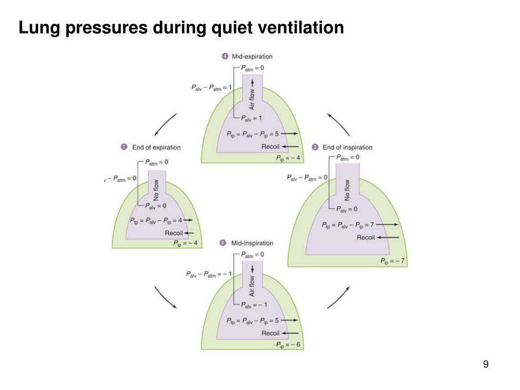 Lung pressures during quiet ventilation