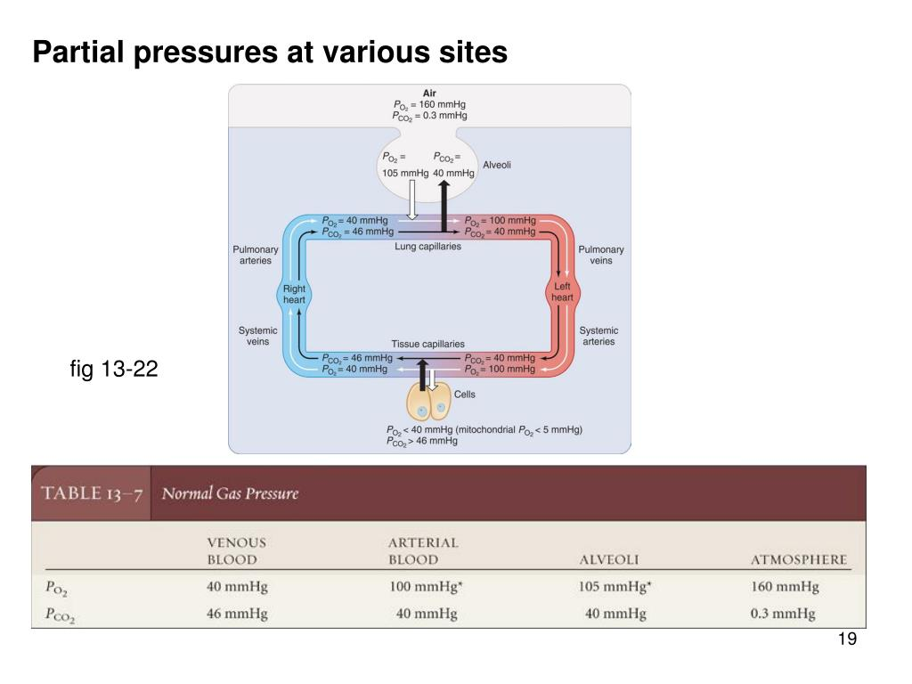 Partial pressures at various sites