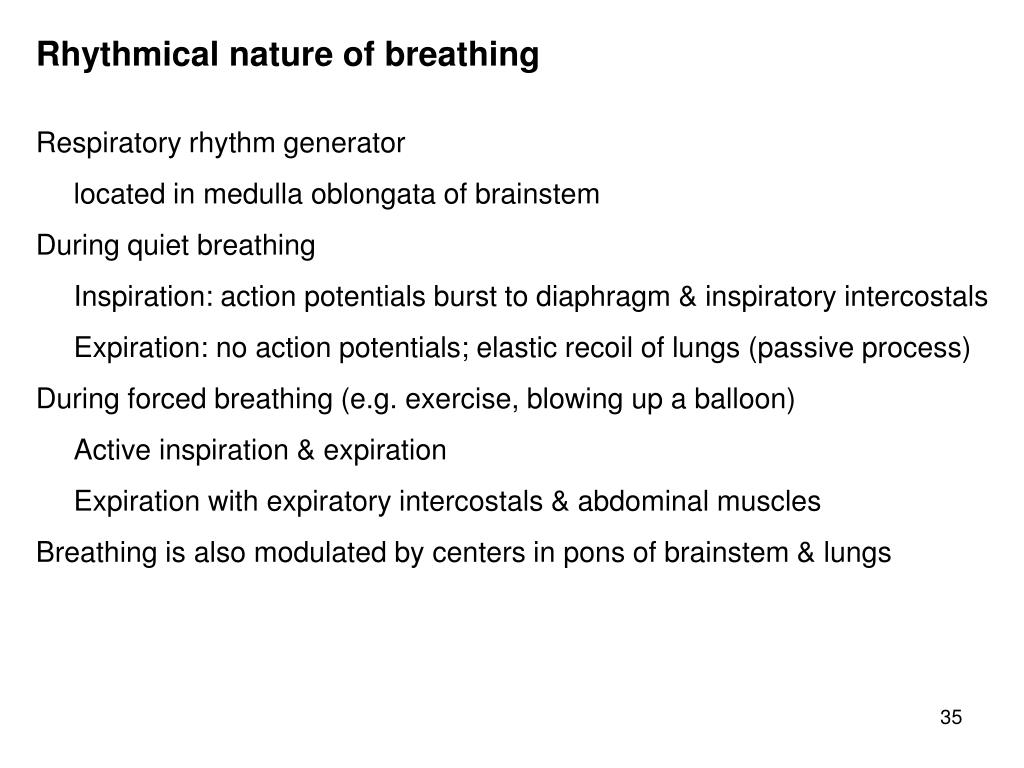 Rhythmical nature of breathing