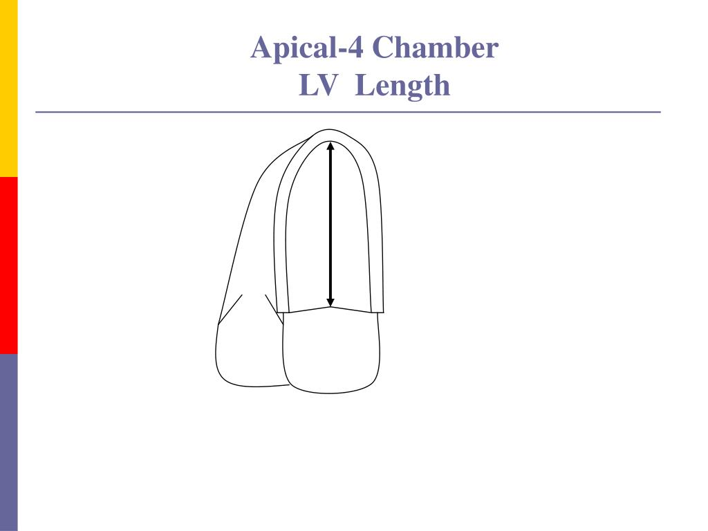 Apical-4 Chamber