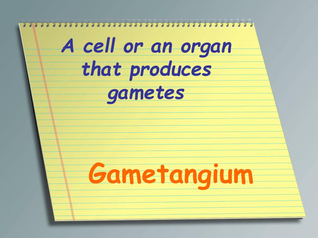 A cell or an organ that produces gametes