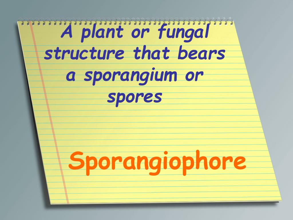 A plant or fungal structure that bears a sporangium or spores